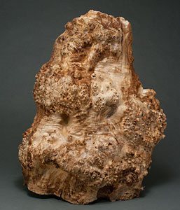 burl maple wood